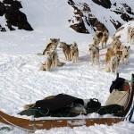 Гренландия, 3