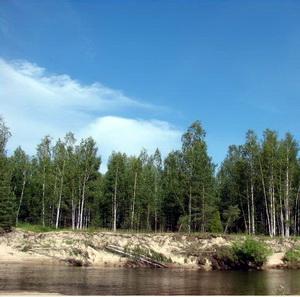Керженец, берег среди сосен