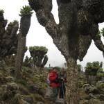 Килиманджаро, 10