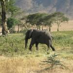Килиманджаро, 31
