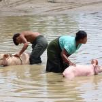 Мьянма, 22