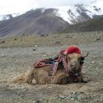 Непал-Тибет, 9