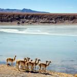 Перу-Боливия-Чили, 3