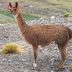 Перу, Боливия, 23