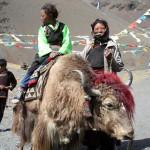 Тибет-21